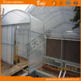 Multi-Span Film Greenhouse con Arch Structure