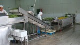 Vegetable моющее машинаа воздушным пузырем