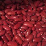 Hochwertig über lange Lieferungs-rote Bohne