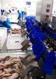 Máquina de clasificación de peso de alimentos de pollo y camarones