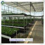 Agricoltura vuota di vetro della Rosa della serra dello strato