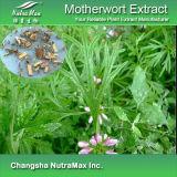 Extrait naturel de Motherwort de 100% (10 : 1, 20%Alk)