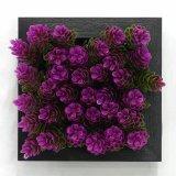 Succulent 플랜트 구 Jy23212546의 인공적인 플랜트 그리고 꽃