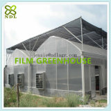 Chambre verte de systèmes hydroponiques Tempered pour le légume