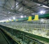 Exploração agrícola de galinha do painel de sanduíche do vidro de fibra da construção de aço/casa claras
