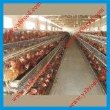 Équipement de ferme de poulet pour des couches de poulet