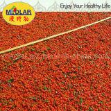 Nêspera Goji secado orgânico Wolfberry secado baga