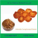 低価格の自然なAntrodia Camphorataのエキス