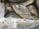 Hete verkoop-Chinees bewerkte Bevroren Zwarte Chopa