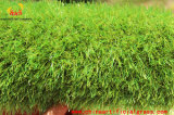 Genre de centrale artificielle nommé couvre-tapis d'Artificial Grass d'usine