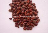 Выдержка 2% Jujubosides семени Jujube выдержки семени Ziziphi