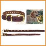 De gepersonaliseerde Grote Kragen van het Leer van het Huisdier van de Hond voor dagelijks het Lopen Opleiding