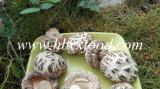 Высушенная еда гриба Shiitake белого цветка вкусная