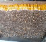 Lápis de madeira do HB de 7 polegadas com ponta do eliminador (SKY-012B)