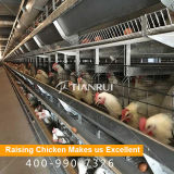 4 cages de batterie de volaille de poulet de couche de rangées pour la ferme nigérienne