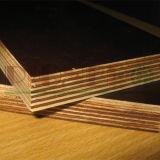 Film stellte Furnierholz für Aufbau von der Linyi-Furnierholz-Fabrik gegenüber