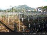 2016 강철 구조물을%s 가진 채소 재배자를 위한 최신 판매 단 하나 경간 온실
