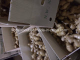 250g & op Dry Ginger