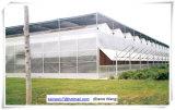 토마토를 위한 중국 공장 고품질 필름 녹색 집