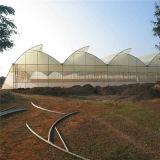 Estufa agricultural plástica da película de polietileno da fábrica de China para a venda