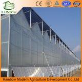 Ensamblaje Fácil Hoja PC Greenhouse Venlo Roof Invernadero Agrícola