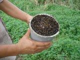 Organisch Landbouwbedrijf dat de ZonneVal van de Moordenaar van de Mug van het Ongedierte van het Insect gebruikt