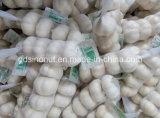 Nouvel Ail de Blanc de la Chine de Récolte