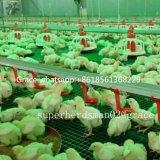 Sistema de alimentação de frango com venda quente com desenho de design gratuito