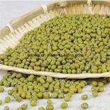 2016粒の新しい穀物の新しい緑のMung豆