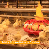 Польностью автоматическое оборудование птицефермы цыпленка клетки бройлера для Кении