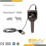 Ultrason vétérinaire tenu dans la main pour le diagnostic de grossesse de porcs (M30)