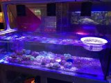 Full Spectrum remoto LED ajustable luces del acuario