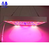 Il LED idroponico coltiva 50W chiaro LED si sviluppa chiaro, comitato LED del LED coltiva gli indicatori luminosi
