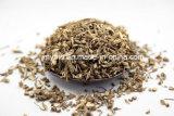 최고 가격을%s 가진 최신 판매 고품질 5% Saikosaponins 자연적인 Bupleurum 추출 10:1 20:1