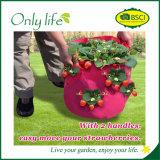 Onlylife bewegliches am meisten benutztes PET Gemüserot wachsen Beutel Dia35X45cm
