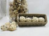 Cogumelo de Shiitake profundo da flor branca do preço barato