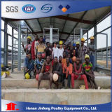 H schreiben verwendete Geflügel-Batterie für Nigeria-Bauernhof