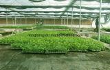 PPのPEによって編まれる針パンチ地被植物