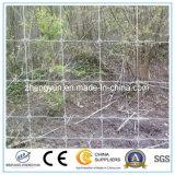 Il tipo rete fissa animale del nodo della rete metallica della rete fissa dei cervi del pascolo