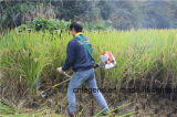 Жатка щетки для риса