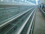 Цыпленок слоя (яичка) арретирует систему или все оборудование птицефермы