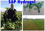 AgricutureSAP Hydrogelのための極度のWater Retention Agent
