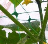 Pflanzenstütznetz