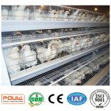 층 (계란) 닭은 시스템 장비를 감금한다