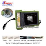 O veterinário do teste de gravidez da vaca utiliza ferramentas o varredor do ultra-som