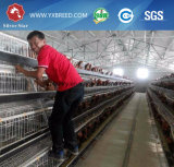 H tapent le matériel de volaille pour des poulets à rôtir