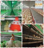One Stop 2016年のBroilerのための自動Poultry Feeding System