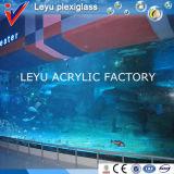 A qualidade superior da classe moldou a folha acrílica para aquários
