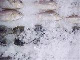 8ton/Day de Machine van het Ijs van de vlok voor Marine Bevroren Vissen