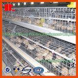 Nuova strumentazione del pollame della batteria per lo strato dell'azienda agricola di pollo